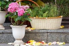 Flores rosadas en los pasos del granito y los pétalos color de rosa Imágenes de archivo libres de regalías