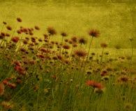 Flores rosadas en un campo Imagenes de archivo