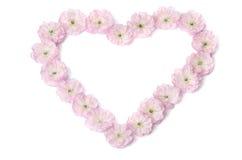 Flores rosadas en una forma del corazón Foto de archivo libre de regalías