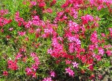 Flores rosadas en verde Fotos de archivo