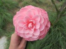 Flores rosadas hermosas imagen de archivo