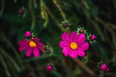 Flores rosadas hermosas imagenes de archivo