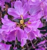 Flores rosadas hermosas Imágenes de archivo libres de regalías
