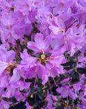 Flores rosadas hermosas Foto de archivo