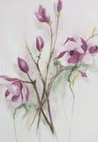 Flores rosadas hermosas de la magnolia Imagenes de archivo