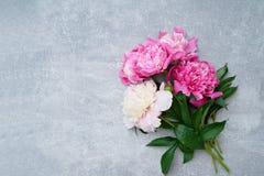 Flores rosadas hermosas de las peonías en fondo gris Copie el espacio, t Foto de archivo