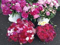 Flores rosadas hermosas en el florista Imagen de archivo