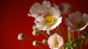 Flores rosadas lindas