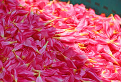 Flores rosadas para las guirnaldas La India Foto de archivo libre de regalías