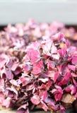 Flores rosadas secadas del hyrdragea Foto de archivo