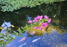 Flores rosadas sobre el agua imagen de archivo libre de regalías
