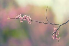 Flores rosadas suaves Fotografía de archivo