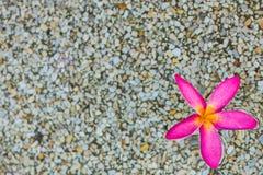 Flores rosadas tailandesas del plumeria con el fondo de la arena y del agua fotografía de archivo