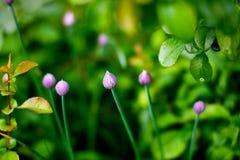 flores rosadas Trompeta-formadas Imagen de archivo libre de regalías