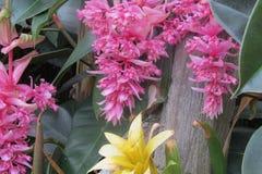 Flores rosadas tropicales Imagen de archivo libre de regalías