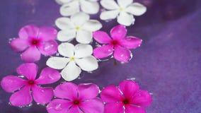Flores rosadas video que flotan en el cuenco de agua de la visión superior Decoración del balneario