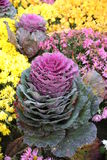Flores rosadas y amarillas Imagenes de archivo