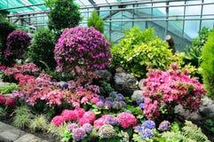 Flores rosadas y azules en Palmen Garten, Frankfurt-am-Main, Hesse Fotografía de archivo