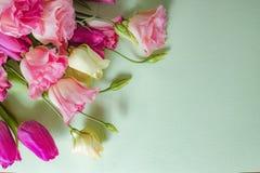 Flores rosadas y blancas en el fondo verde claro, disposición con el espacio del texto libre, concepto de la tarjeta de felicitac Imagen de archivo libre de regalías