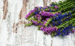 Flores rosadas y púrpuras Fotos de archivo libres de regalías