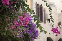 Flores rosadas y púrpuras brillantes en un fondo borroso de un ligh Fotografía de archivo libre de regalías