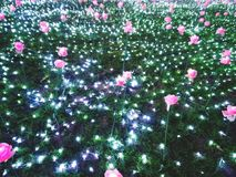 Flores rosadas y pequeñas luces en el prado imagen de archivo
