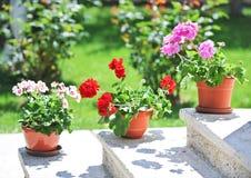 Flores rosadas y rojas en potes en la repisa fotografía de archivo