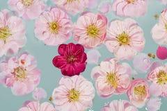 Flores rosadas y rojas que flotan en el agua Fotografía de archivo libre de regalías