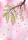 Flores rosados en rama de árbol EPS 10 Ilustración del Vector