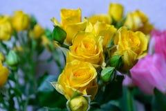 Flores rosas amarelas fundo textura feriado o 8 de março fotos de stock