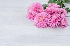 Flores rosas claras apacibles de crisantemos en vagos de madera blancos fotografía de archivo libre de regalías