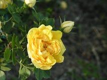 Flores rosas ?rea da paisagem nos raios do sol de ajuste fotografia de stock