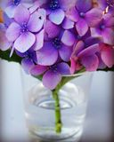 Flores roxas Foto de Stock