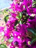 Flores roxas agradáveis imagens de stock royalty free