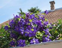 Flores roxas ao lado de um telhado da casa Imagens de Stock