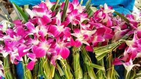 Flores roxas bonitas Imagens de Stock