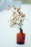 Flores roxas bonitas Ainda vida 1 Ramalhete de flores selvagens em um vaso de vidro Flores agradáveis nas garrafas Tabela decorad Imagens de Stock Royalty Free