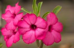 Flores roxas brancas no jardim Foto de Stock Royalty Free