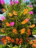 Flores roxas coloridas da orquídea Foto de Stock Royalty Free