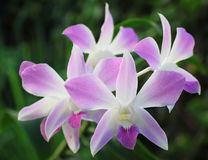 Flores roxas coloridas da orquídea Fotos de Stock Royalty Free