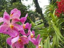 Flores roxas coloridas da orquídea Imagem de Stock Royalty Free