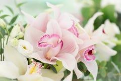 Flores roxas coloridas da orquídea Fotografia de Stock