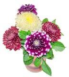 Flores roxas e amarelas do crisântemo e do dhalia, detalhes ilustração stock