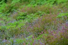 Flores roxas e cor-de-rosa selvagens em um parque em Victoria Fotografia de Stock Royalty Free