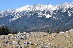 Flores roxas e montanhas nevado Fotos de Stock Royalty Free