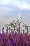 Flores roxas em Rotterdam fotografia de stock