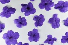 Flores roxas em um fundo branco fotografia de stock royalty free
