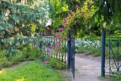 Flores roxas em uma cerca contra um fundo das flores brancas e do abeto vermelho Imagens de Stock Royalty Free