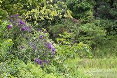 Flores roxas entre as hortaliças fotografia de stock royalty free
