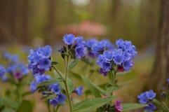flores roxas na floresta imagens de stock